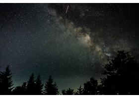 在繁星点点的夜空下拍摄的树木的美丽剪影_1230486301