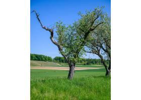 在绿色的田野中央长着一棵树的美丽镜头_1294816401