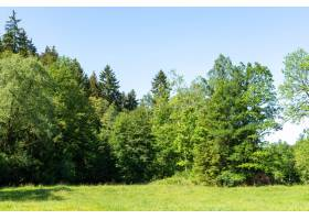 在晴朗的蓝天下拍摄美丽的绿色风景_1315342601