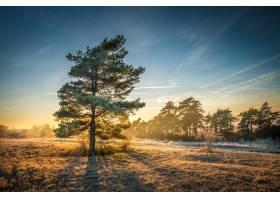 在美丽的天空下在背景中有一条树线的田野_1063719401