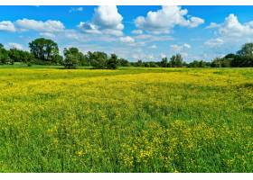 在蓝色多云的天空下远处有树木的黄色花田_840900401