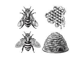 一套蜜蜂黄蜂蜂巢蜂巢复古绘画_6822923