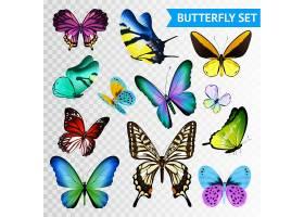 隔离在透明背景上的大大小小的五彩蝴蝶_3791507