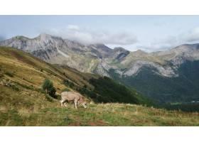白天多云的天空下绿树成荫的群山环绕着放牧_11678146