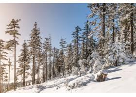 阳光和蓝天下的森林里被白雪覆盖的树木_10860243