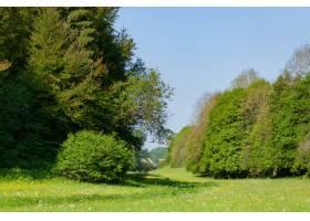 白天蓝天下绿树成荫的草地_10292650