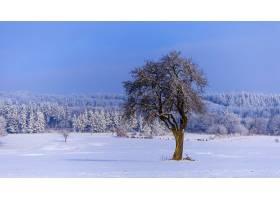 白雪覆盖的树木冬日美景_13006230