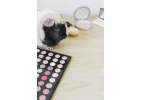 在木质背景上使用眼影调色板和腮红的豚鼠特_3006377