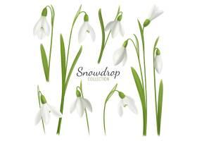 逼真的雪花花套装空白背景插图文字和图_6871675