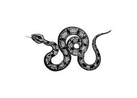 蟒蛇的复古插图_3776930
