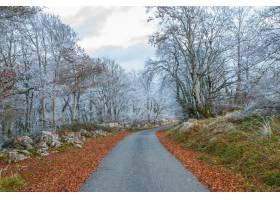 穿过树林的道路两旁长满了白色的霜冻的树木_13005770