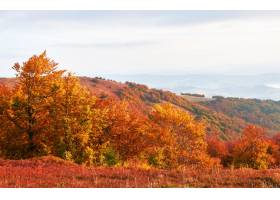 高原植被温和的夏季和异常美丽的色彩在秋天_10141235