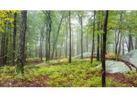 高大树木林中的美丽区域_8943683