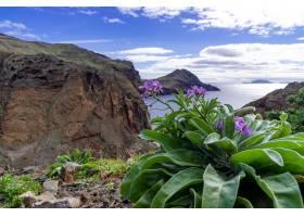 紫色的花朵可以看到葡萄牙马德拉岛的美丽_12152868