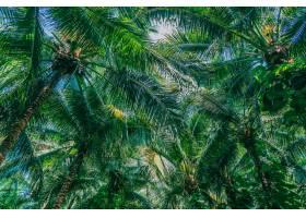 美丽的户外自然椰子树和蓝天上的树叶_4566914