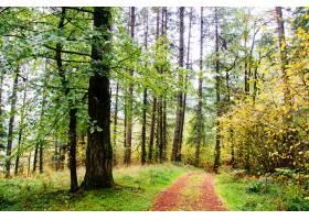 美丽的森林风光_7678241