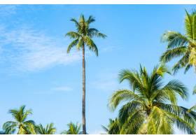 美丽的热带椰子树以白云环绕蓝天为自然背_11408940