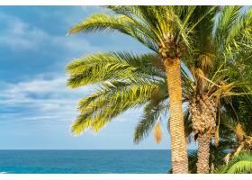 美丽的绿色棕榈树映衬着蔚蓝的阳光天空背_9081976