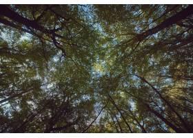 背景为蓝天的森林中高大茂密的树木的美丽结_7814178