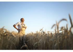 资深农民农艺师在麦田里远眺的肖像_11450817