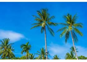 蓝天上美丽的椰子树_5176712