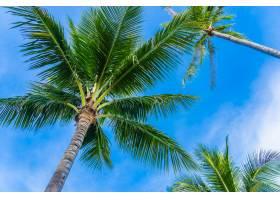 蓝天上美丽的椰子树_5176717