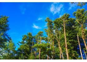 蓝天上高大树木的美丽景色_10186008