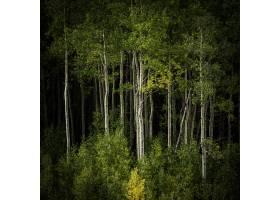 长满高大树木和其他植物的森林的美丽风景_10399171
