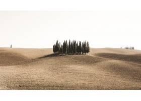 晴朗天空下沙漠原野上的大片松树_8281188