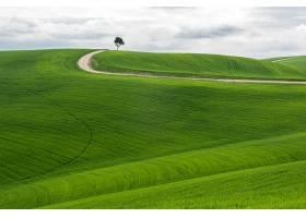 水平拍摄的一棵孤立的树在多云的天空下有一_8281489