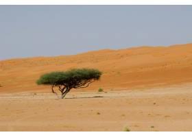 沙漠地区白天的一棵绿叶树_9851575