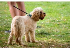 特写镜头一只狗和主人站在一片绿色的风景_10758995