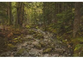 在绿树成荫的森林中央拍下了一条岩石小径_9283096