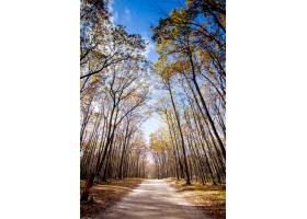 在蓝天的高大树木中间的小径_8507258
