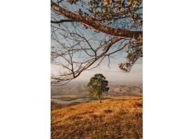 垂直拍摄的一棵绿树在晴朗的天空下可以俯_12651372