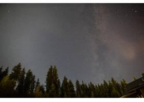多云的星夜常绿的树木_5451231
