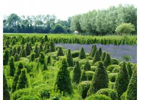 广角拍摄的一片田野上种植着不同的绿树背_10110631