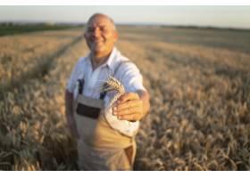 成功的高级农民农艺师站在麦田里手持小麦_11450832