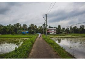 一名男子沿着一条漫漫长路回家两边都是稻_1278032