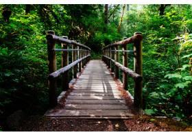 一座被树木和绿色植物包围的木桥的广角镜头_8507212