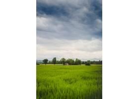 一片美丽的绿色田野的垂直镜头远处可以看_7814601