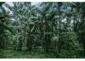 低角度拍摄巴西野生森林中的高大棕榈树_11697401