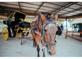 古城里的一匹马和一辆漂亮的旧马车_4670715