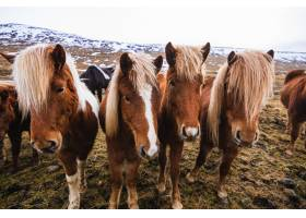 冰岛多云天空下积雪和草地覆盖的田野里冰岛_10419400