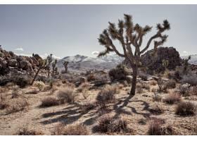 加利福尼亚州南部有灌木和树木的沙漠远处_9931466