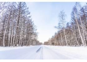 北海道美丽的户外自然景观雪季有树_4097535