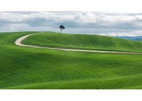 在一片美丽的绿色田野中一棵孤立的绿树在_8507225