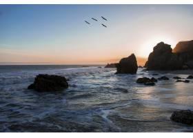 在令人叹为观止的日落中飞过海岸的鸟儿_9283395