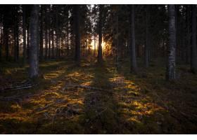阳光用高大的树木照亮了黑暗的森林_8857947