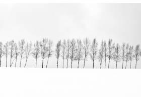 雪季用树枝群构成美丽的户外自然景观_4097538